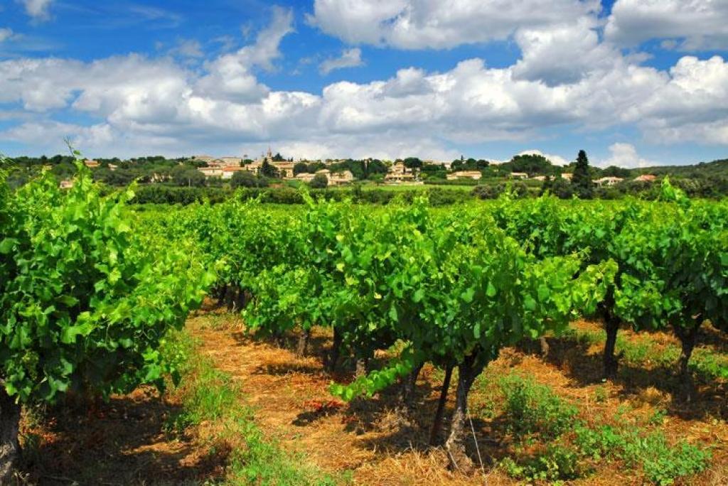 Vignobles - Un placement qui se bonifie avec le temps