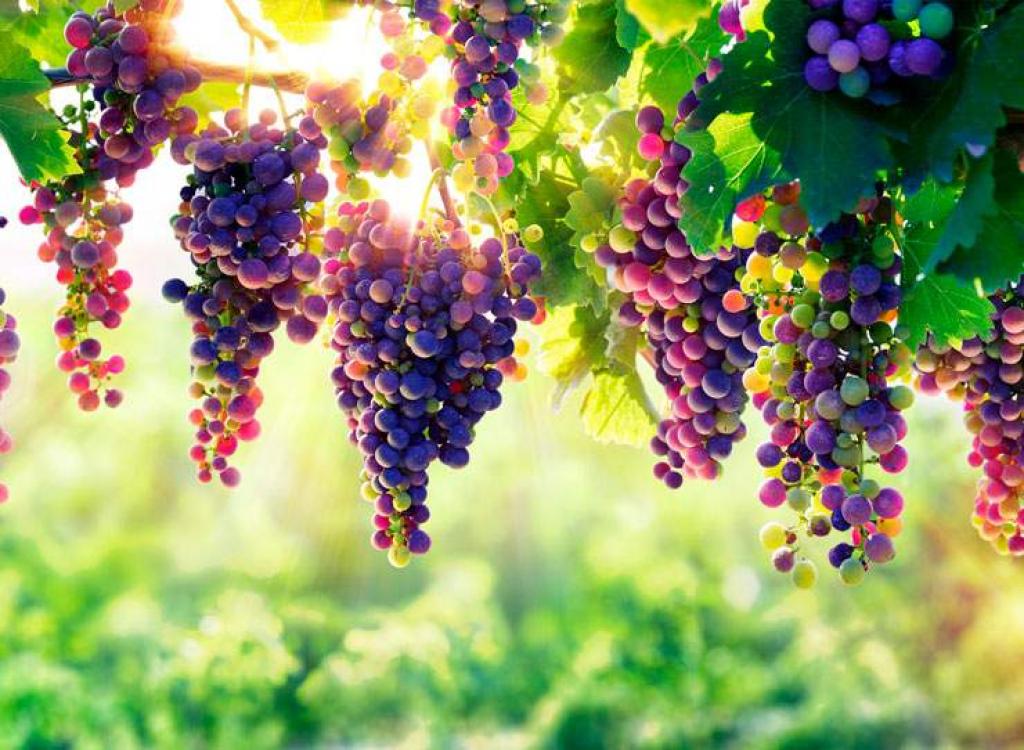 Groupement foncier viticole Donnez du corps à votre patrimoine